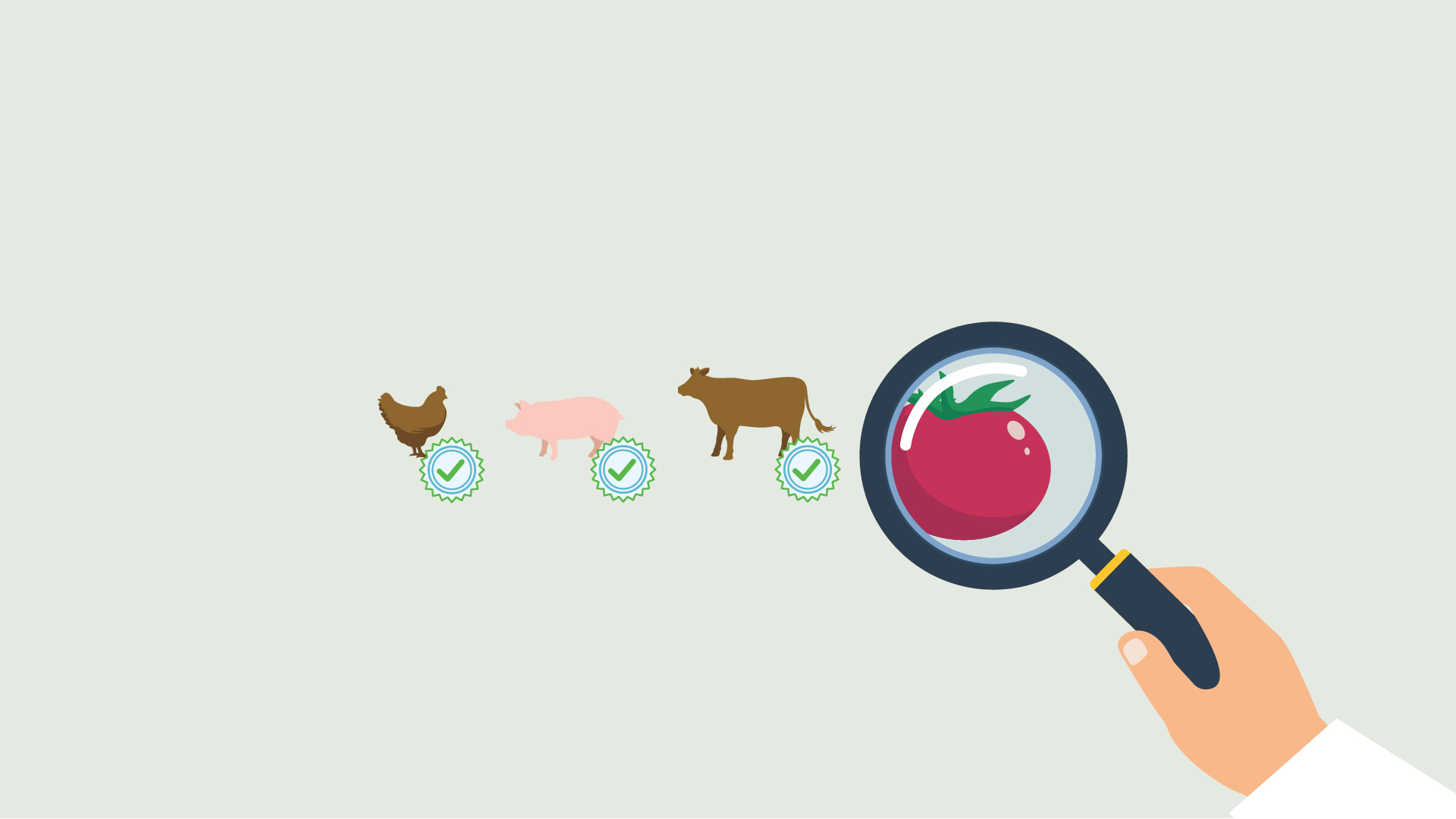 graphic drawing of a chicken, pig, cow and a tomato with a magnifying glass on the tomato